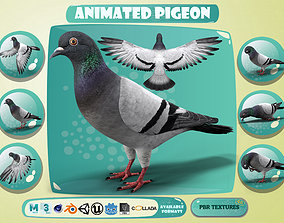 3D model Realistic Animated Rock Pigeon