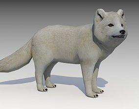 3D model Artic Fox