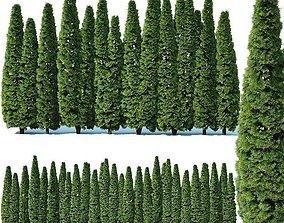 3D model Thuya occidentalis Nr4 Smaragd privacy fence V2