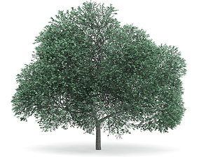 3D English Oak Quercus robur 12m