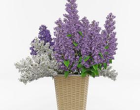 3D House plant 4