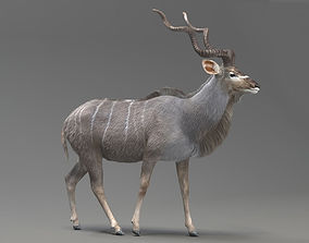 animated Kudu Antelope model