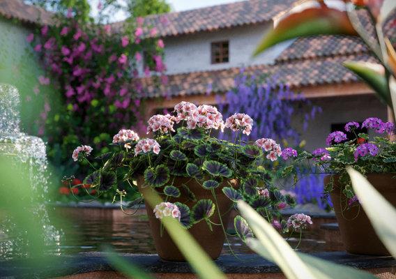 Central America Garden