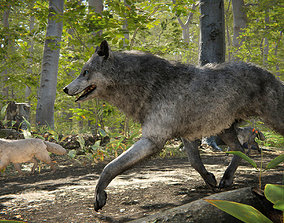 Wolf Realistic 3D