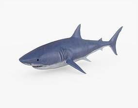 3D asset Great White Shark 01