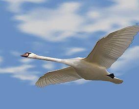 3D model Swans