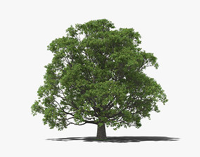 English Oak Tree 3D