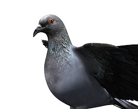 rigged pigeon dove 3d model rigged