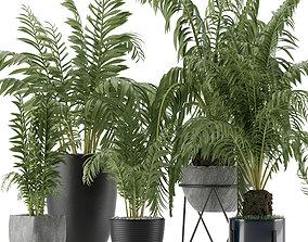 3D Plants Collection 18
