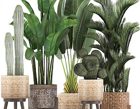 3D model Collection of Exotic plants 346