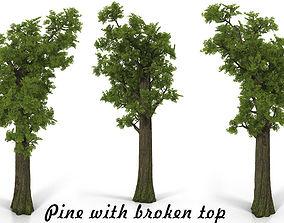 3D model Pine broken top