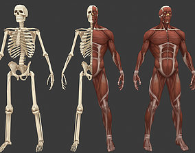 Stylized anatomy model game-ready
