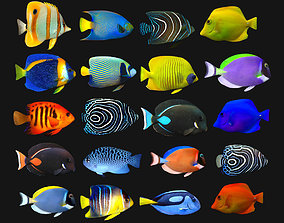 3D asset Fish Megapack Collection Lowpoly