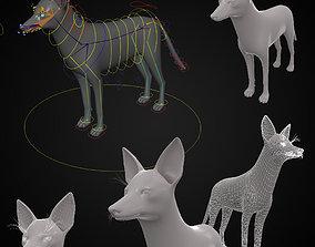 Realistic jackal animal 3d model rigged