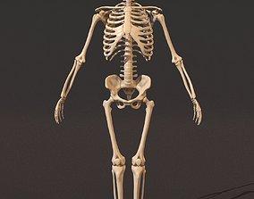 Human male skeleton skeletal 3D model