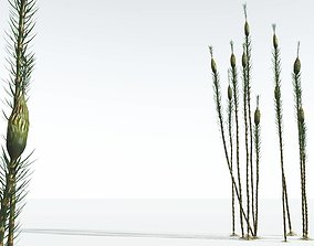 EVERYPlant Suckows Horsetail Tree 11 --16 Models--
