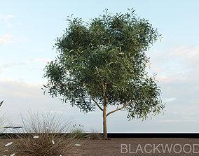 3D model Blackwood