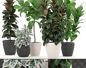 Ficus trees set 3D
