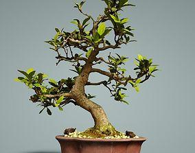 Bonsai Tree 3D model VR / AR ready