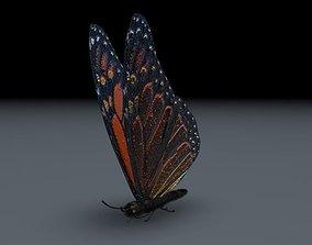 3D model Orange Butterfly