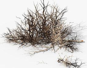 Dry Sparsifolia 3D model