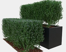 Buxus the long bush in the shape of cube 3D model