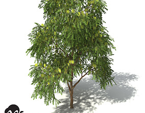 XfrogPlants Green Honey Myrtle 3D