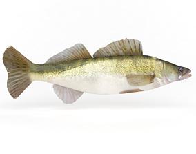 Zander Fish 3D