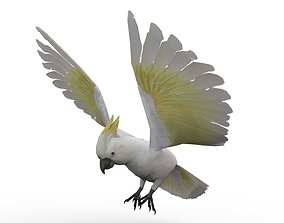 Cockatoo Animated 3D asset