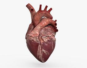 vein 3D model Human Heart