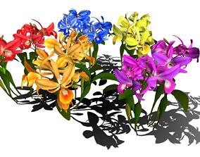 3D asset Flower Guarianthe