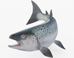 3D asset Pacific Northwest Salmon Rigged