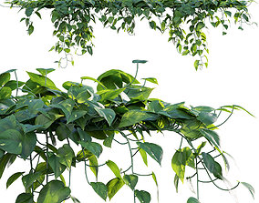 Epipremnum aureum - Money plant - 02 3D model