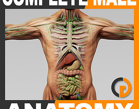 3D model Human Male Anatomy - Body Muscles Skeleton Organs