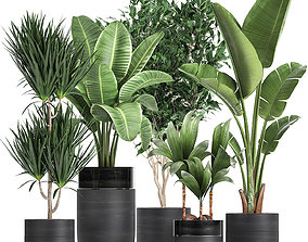 3D model Houseplants in a black pot for the interior 720