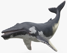 3D model realtime Humpback Whale Rigged