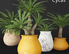 Palm tree jungle 3D model