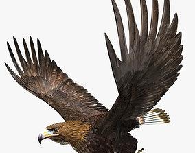 3D model Golden Eagle - rigged - animated standard PBR