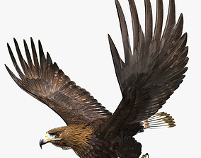 Golden Eagle - rigged - animated standard PBR VRAY 3D