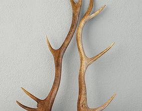 Natural Shed Deer Antlers 3D model