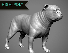 3D print model English Bulldog High-Poly