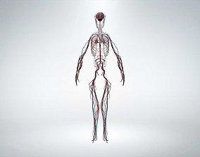 3D model low-poly Nervous system