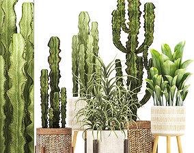 Collection of Exotic Cactus Plants 7 trigona 3D model