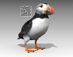 3D model animated Puffin