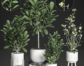 3D Decorative plumeria trees for the interior in white 1