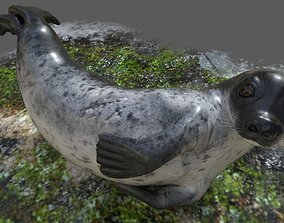 3D model Common Seal Rigged