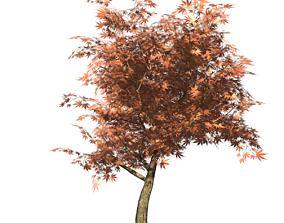 Autumn Maple Type 1 3D asset