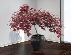 3D model VP Japanese Maple Tree