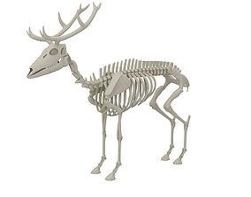 3D model Deer Skeleton
