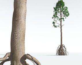 EVERYPlant Common Cordaites 02 --15 Models-- 3D